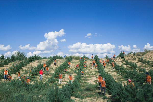 ホルチン砂漠での植樹