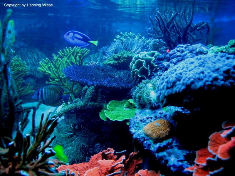 Seitenansicht im Aquarium