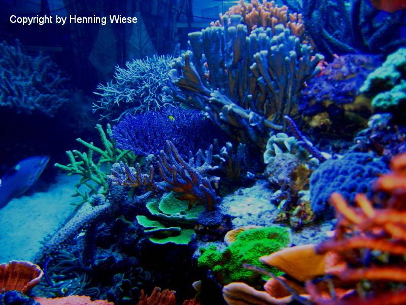 Ansicht des Aquarium