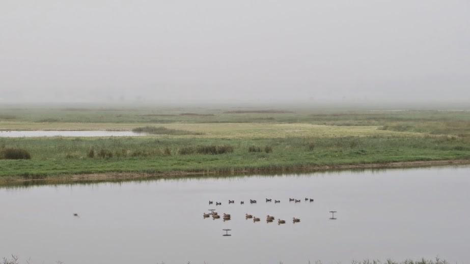Ces canards sont des leurres