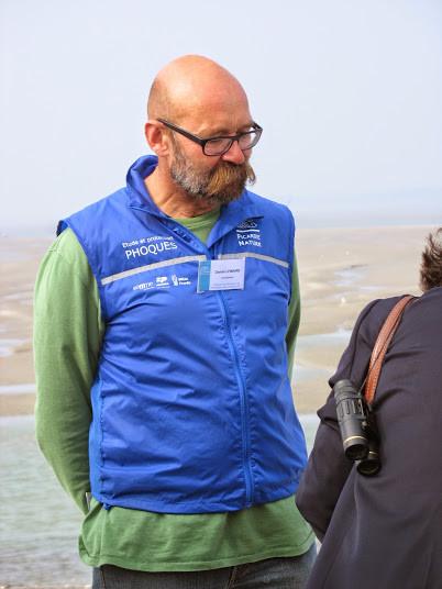 Observation des phoques veaux marins