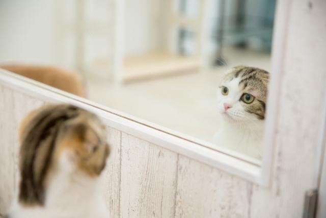 世界は、いつでも鏡を差し出してくれている