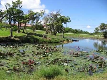 水牛くんがいるのは、こんな池