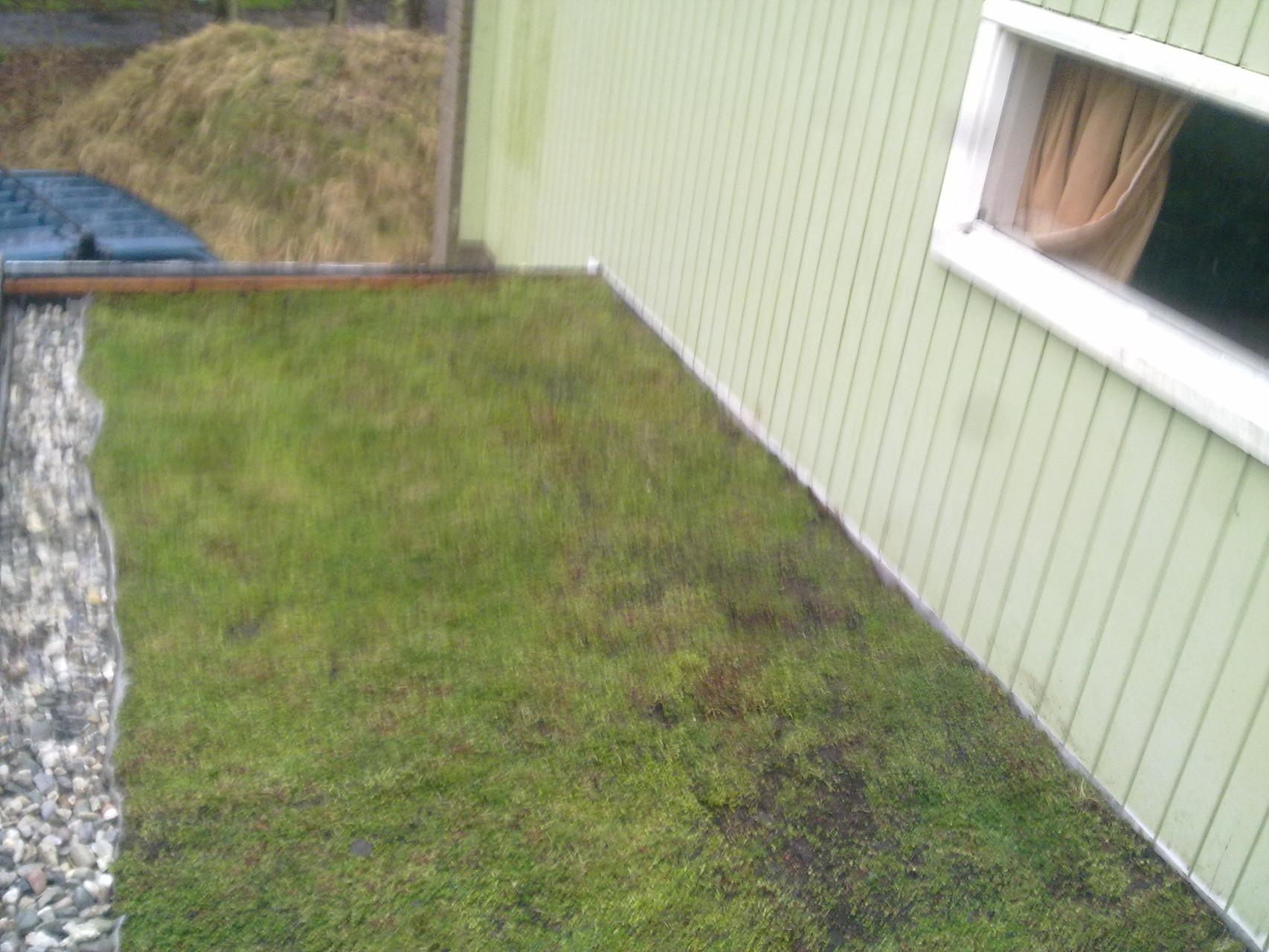 Groen dak, sedumbeplanting, Burgh Haamstede
