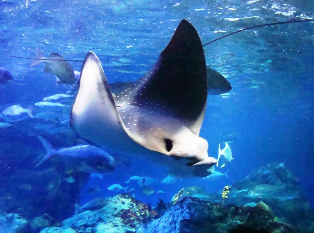 My favorite 'Umitamago aquarium' in Japan