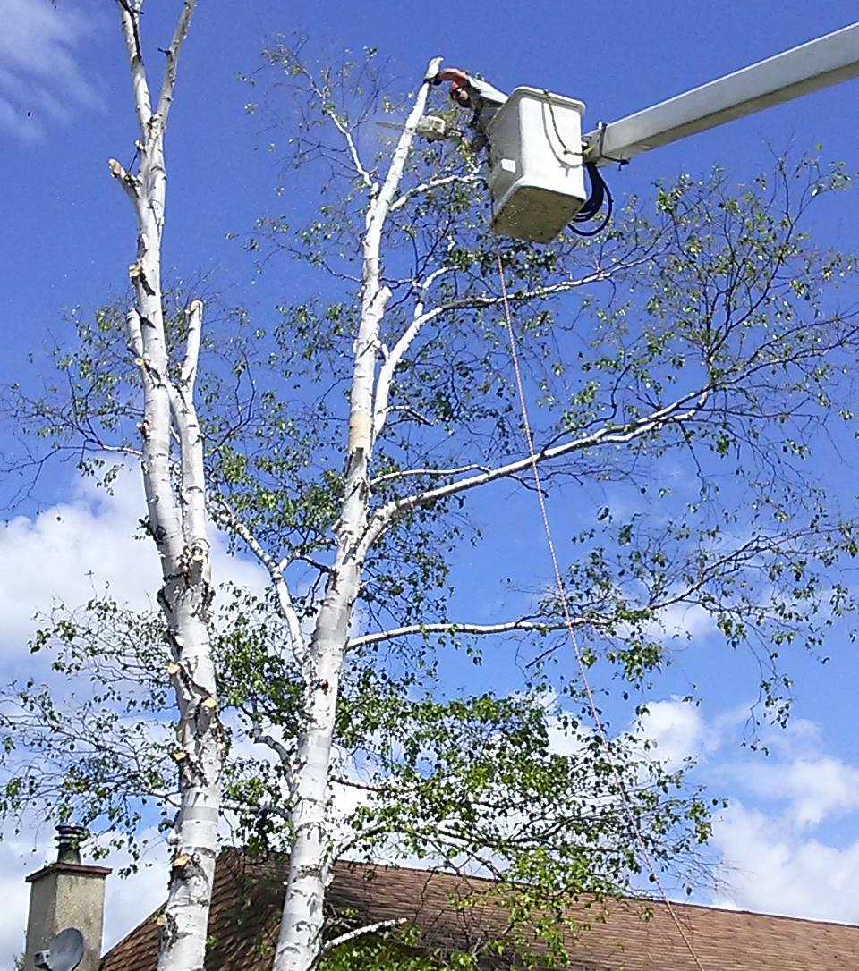 Émondage à la nacelle d'un arbre dangereux au-dessus d'une résidence