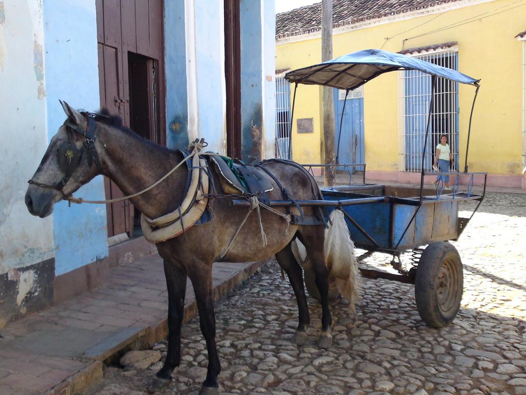 Pferdekutsche in Trinidad
