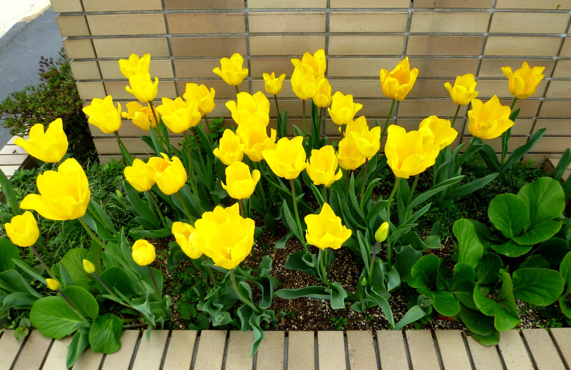 玄関横の花壇(4月後半頃)