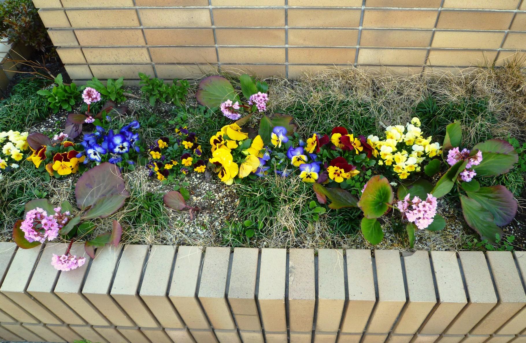 玄関横の花壇(3月前半頃)