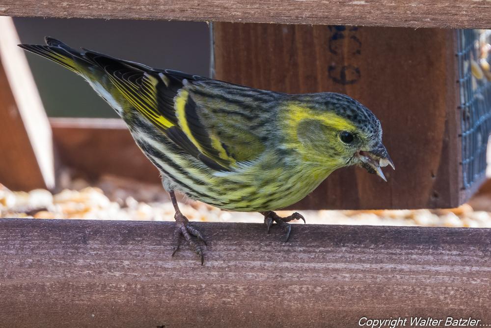 Zum Bericht: Winterhilfe für unsere Gartenvögel