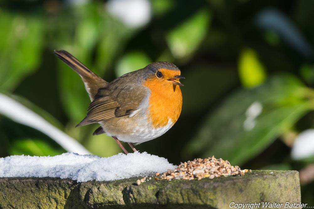 Zum Bericht: Eiseskälte. Helft den Vögeln