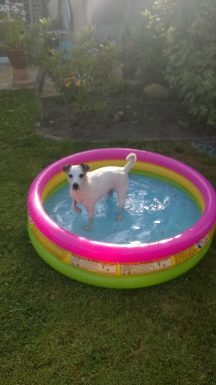 Unser neuer Pool - bei diesem heissen Wetter das optimale.