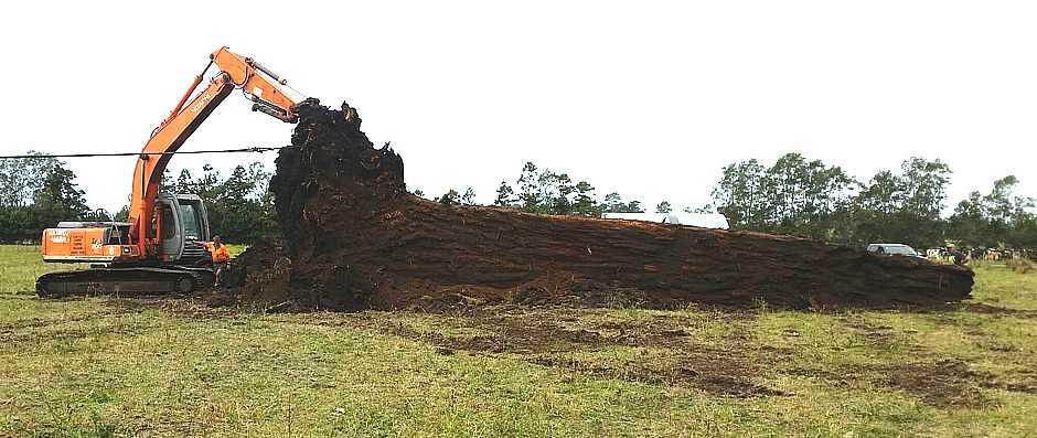 Ausgrabung von riesigem Sumpf Kauri Baum in Neuseeland, wunderschöne Möbel und Massivholztische aus urwüchsigen Hölzern, fantastische Esstische