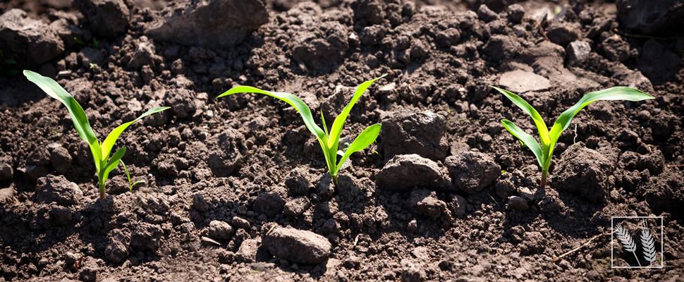 TGB Existenzgründung für landwirtschaftliche Kunden