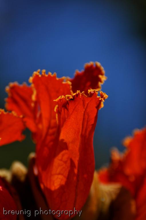 botanical garden santa cruz de tenerife IV