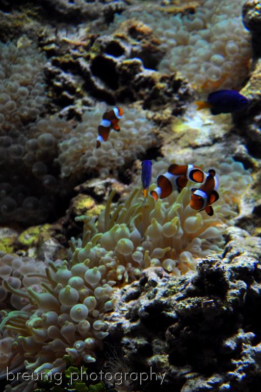 vancouver aquarium II