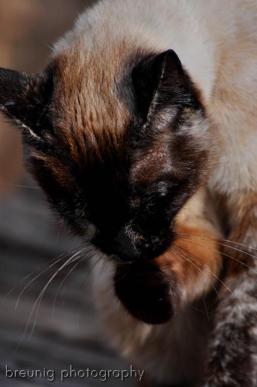 mallorca's cats VII