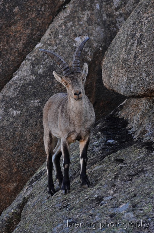 chamois: only 10m view distance - amazing