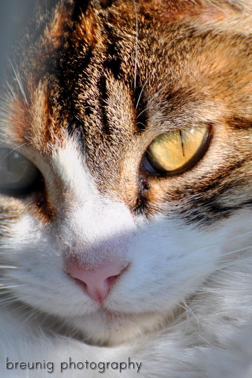 mallorca's cats IV