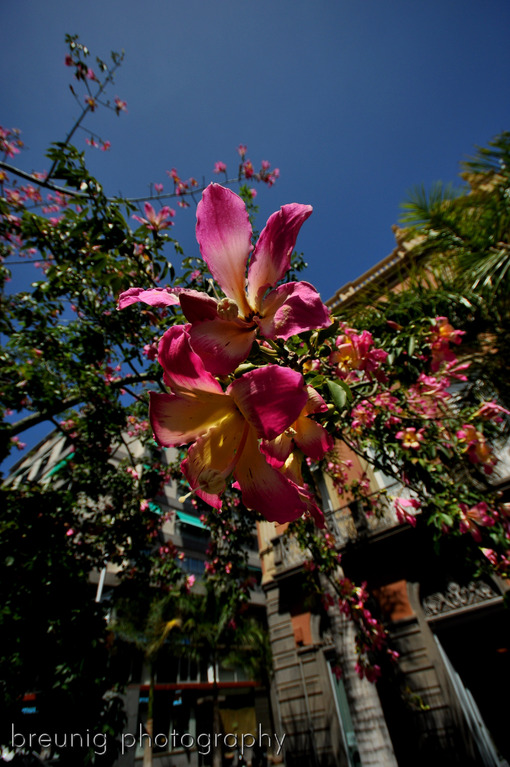 botanical garden santa cruz de tenerife V