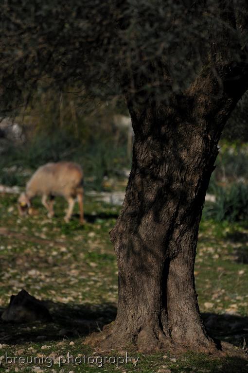 on pasture's land