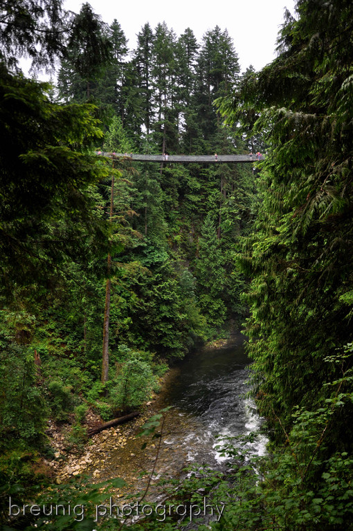 capilano suspension bridge III