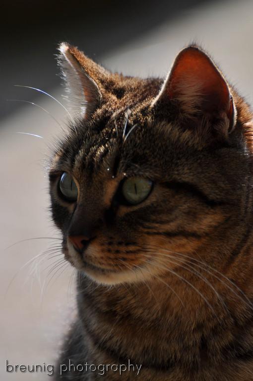 mallorca's cats VI