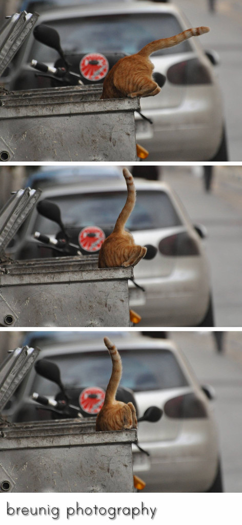 (very) hungry cat - a triptych :)