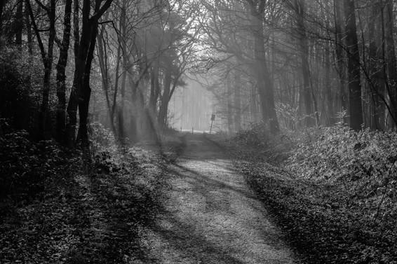 Morgensonne flutet Waldweg II Oberhausen Hühnerheide