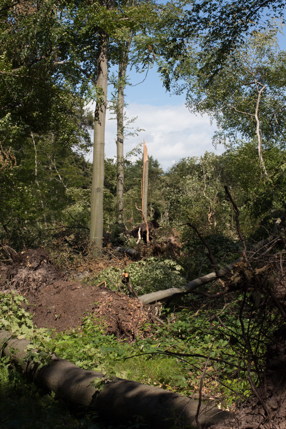 Folgen des Gewitters an Pfingsten in Ratingen Tiefenbroich