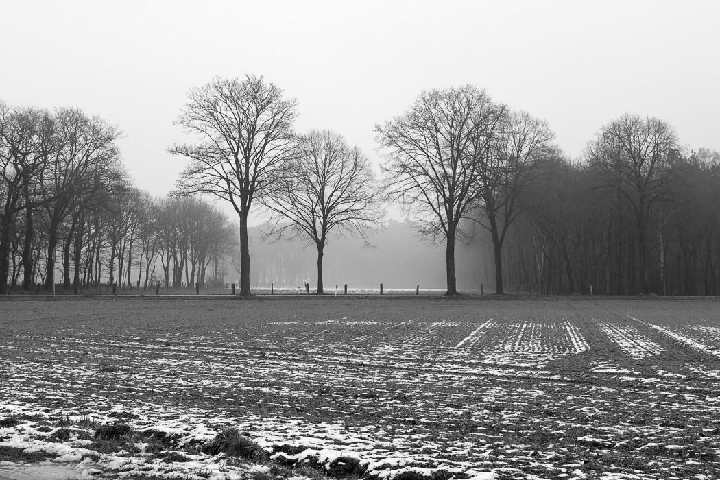 Feld mit Baum im Januar am Niederrhein