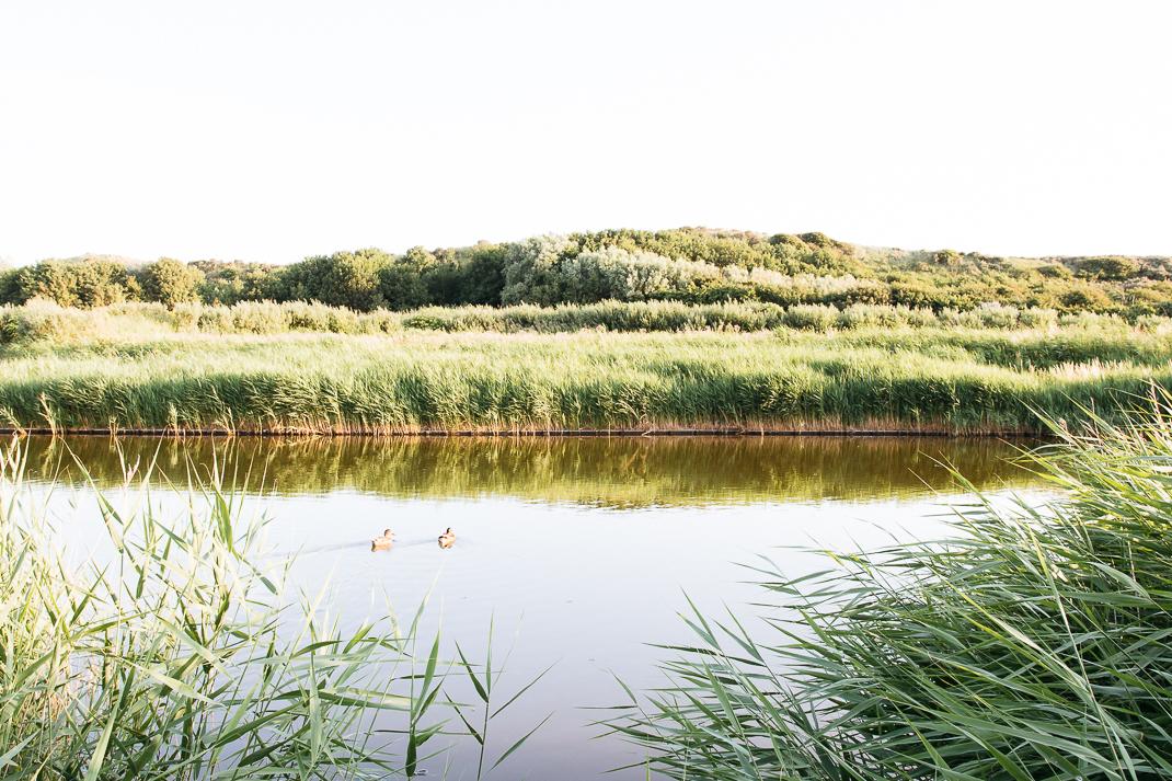 Seegras Ente und Schilf