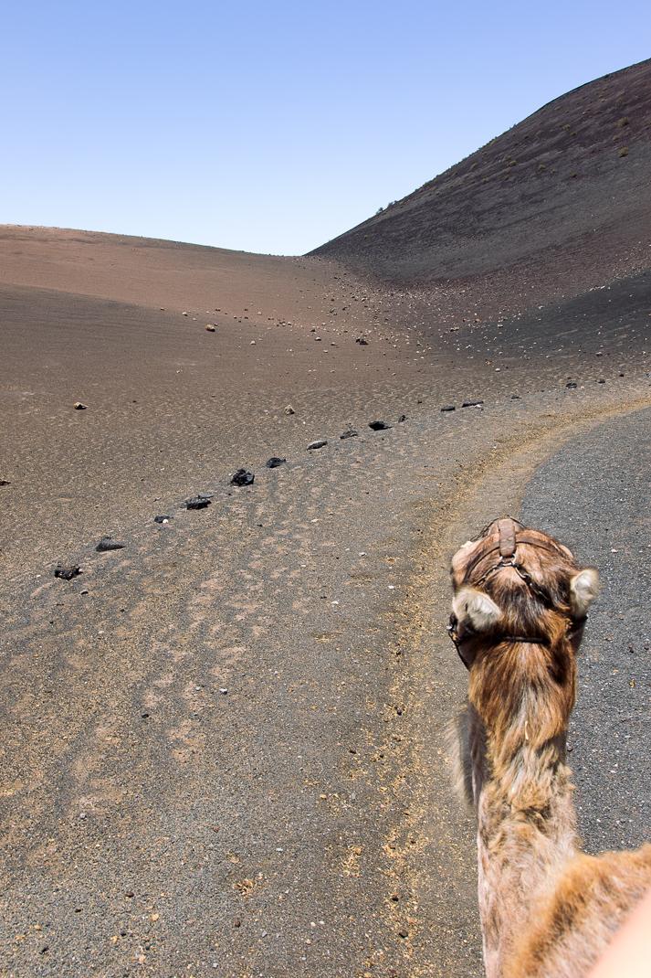 Kamelreiten, Nationalpark Timanfaya