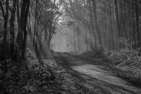 Morgensonne flutet Waldweg III Oberhausen Hühnerheide
