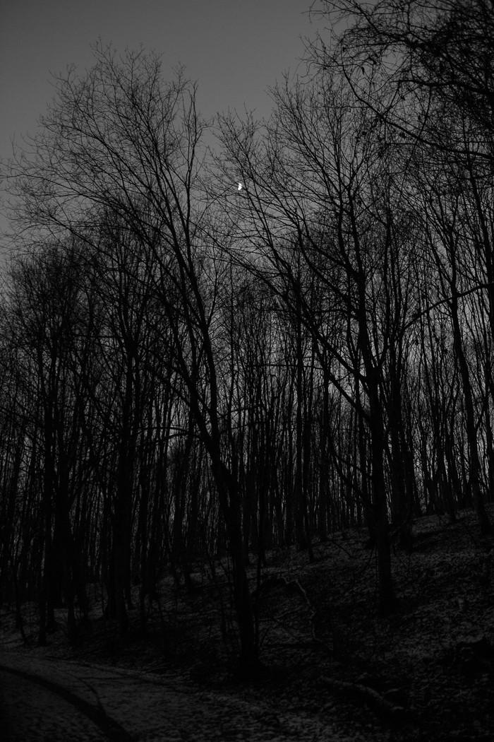 Vollmond im Winterwald