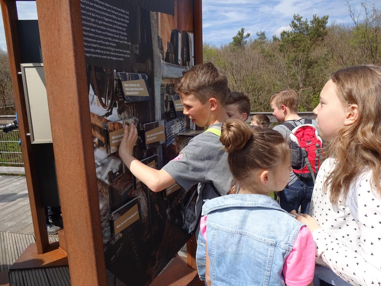 Auf dem Baumwipfelpfad konnte man an interaktiven Stationen viel über den Wald erfahren