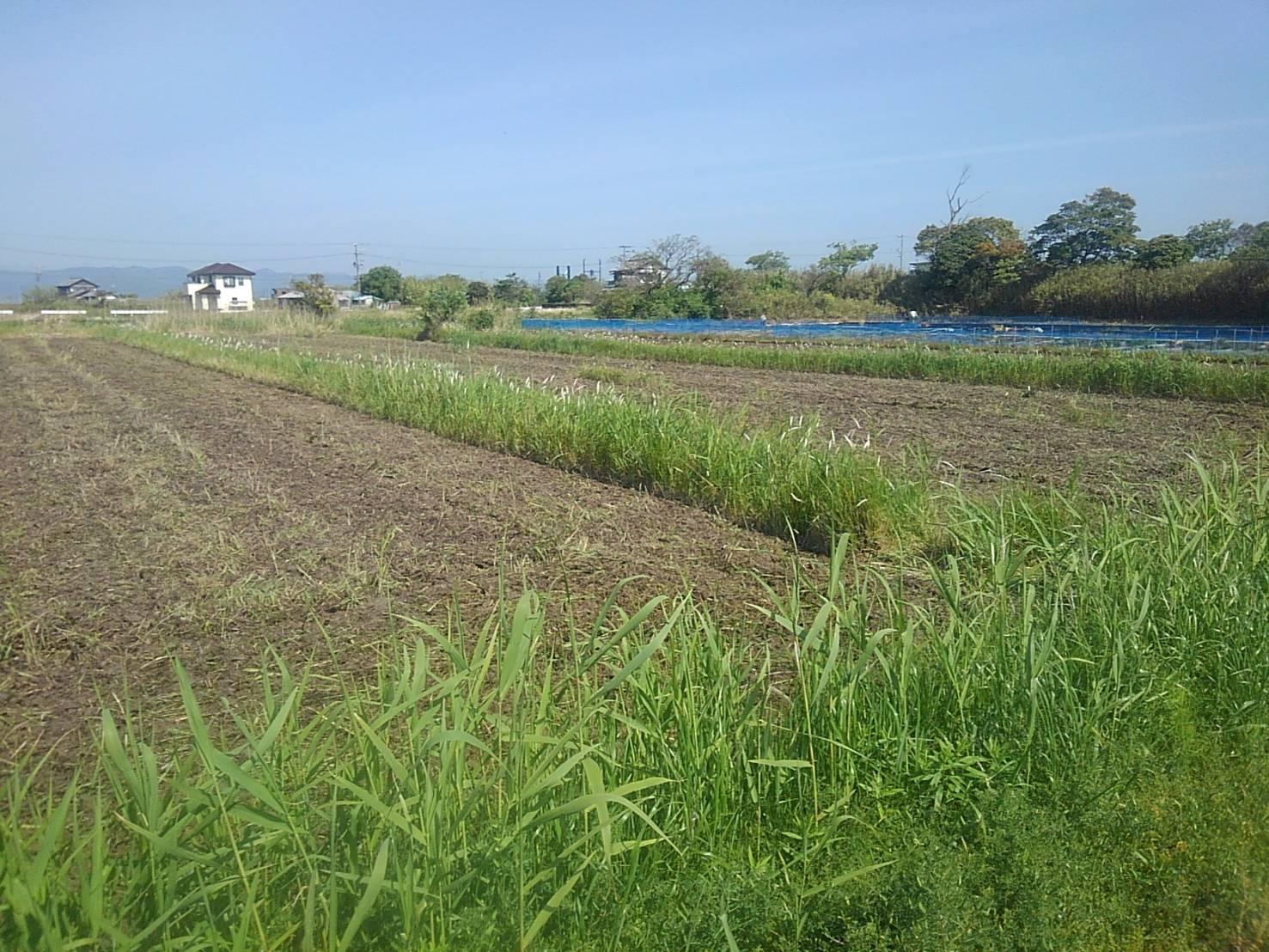 耕作放棄地を開墾