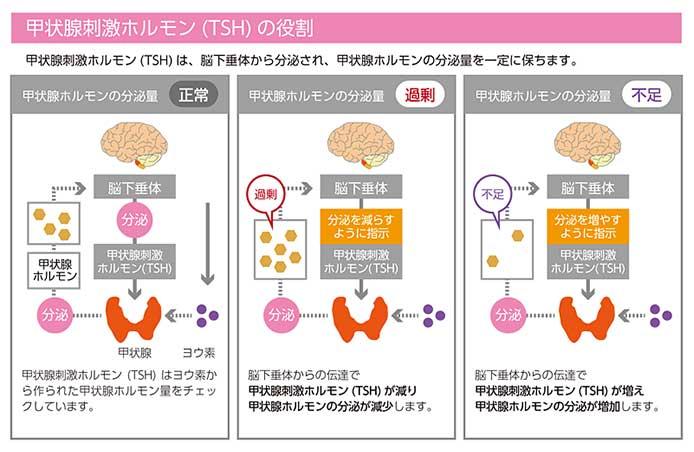 増やす 甲状腺 食べ物 ホルモン