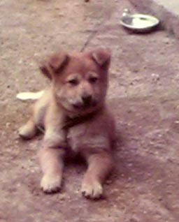 控え室にある写真、題「昭和の子犬」