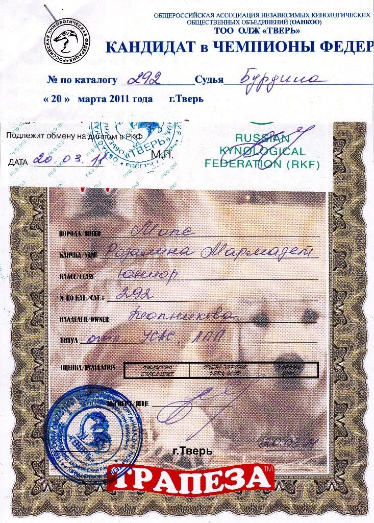 """20.03.2011.кл.юниор,""""Отлично"""", ЮСАС, ЛПП, КЧФ, экс. Бурдина"""