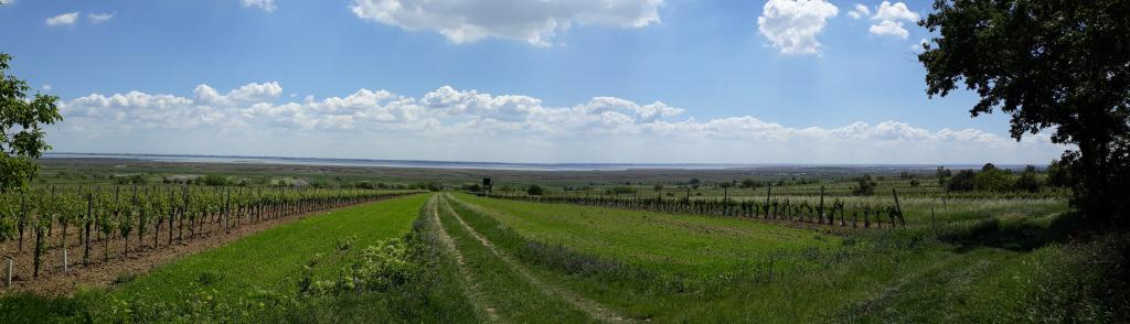 Wo der Wein gedeiht