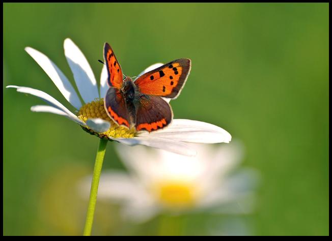 Kleine Geschichte: Hilfe für den Schmetterling