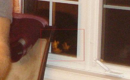 Deux visages insolites dans la fenêtre du salon
