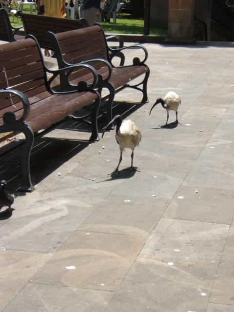 2x ibis!