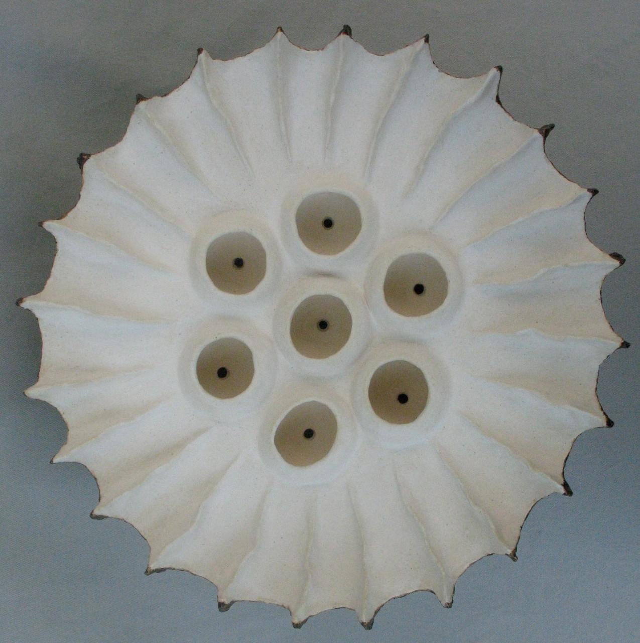 Medium Seed Pod