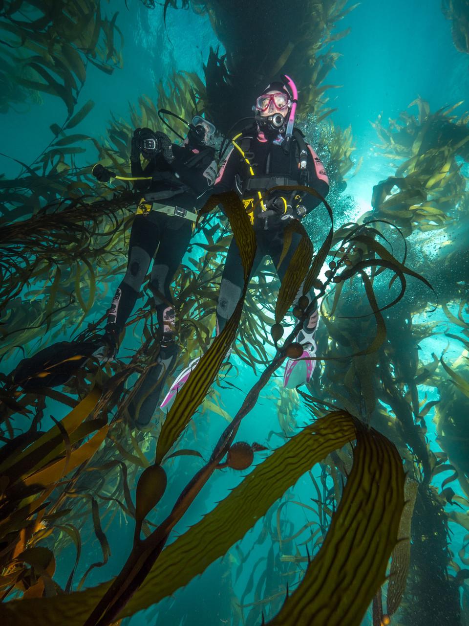 Giant kelp forest, Tasmania [Australia, 2014]