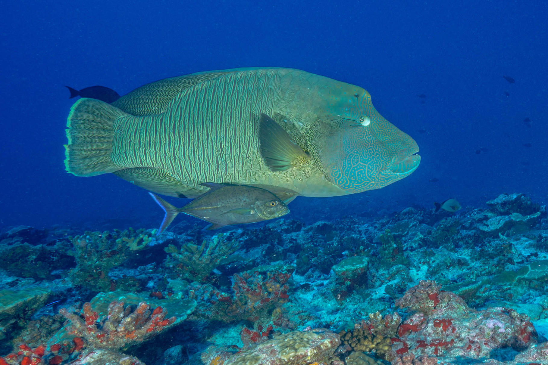 self proclaimed grouper capital of the world - HD 1819×1213