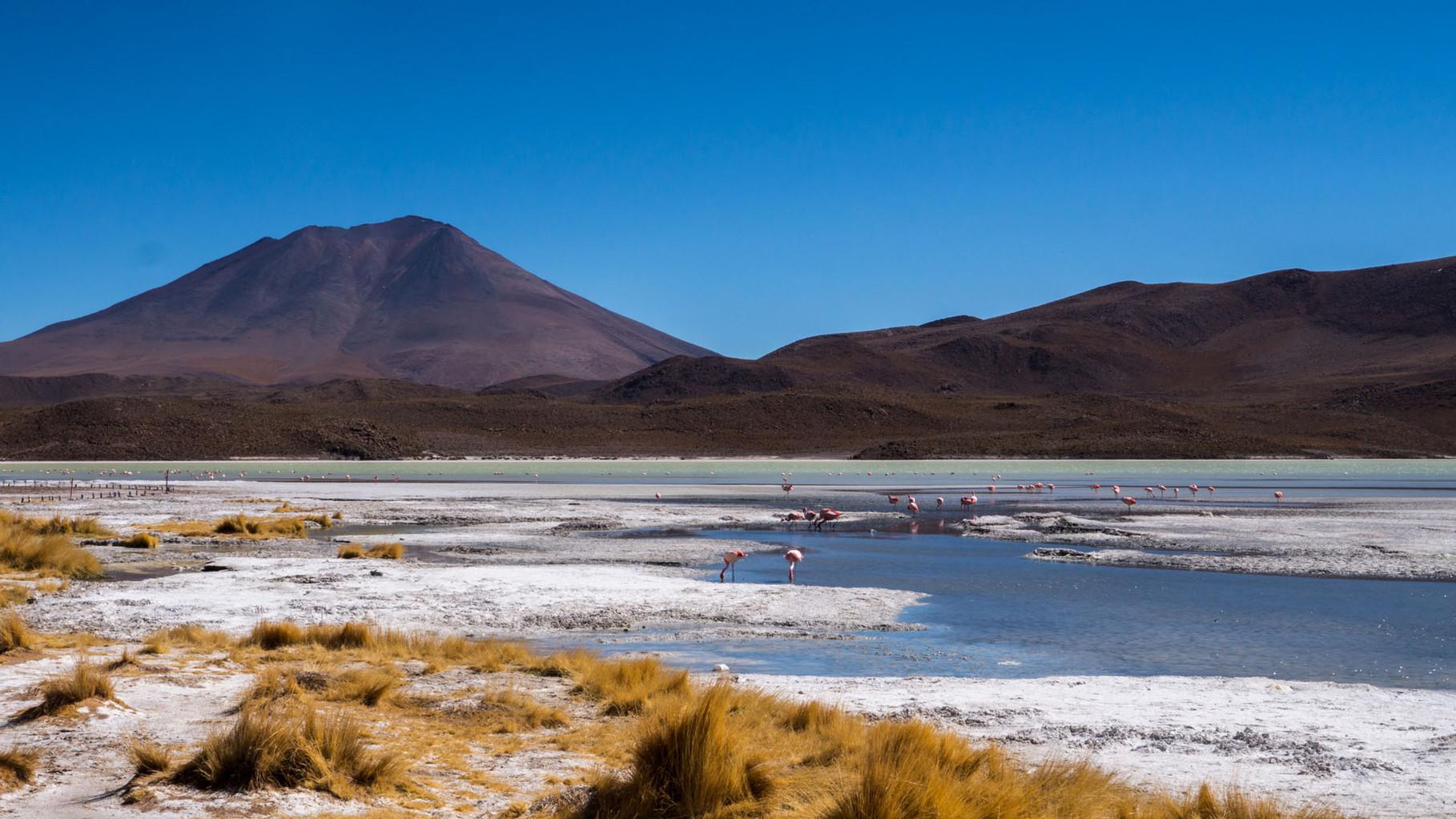 Laguna Hedionda with hundreds of Flamingos