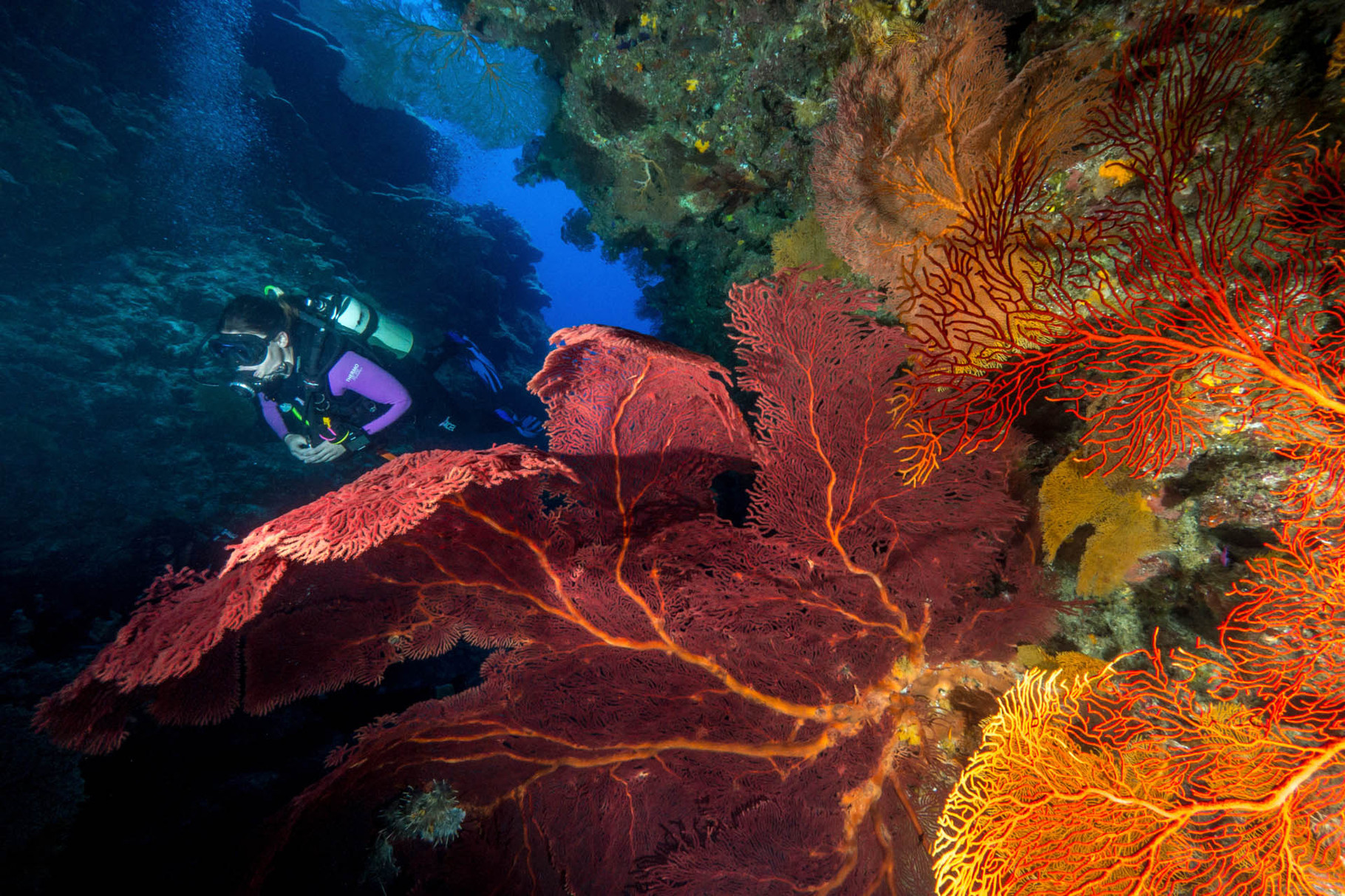 Sea fans (Gorgonia) and diver, Lifou [New Caledonia, 2014]