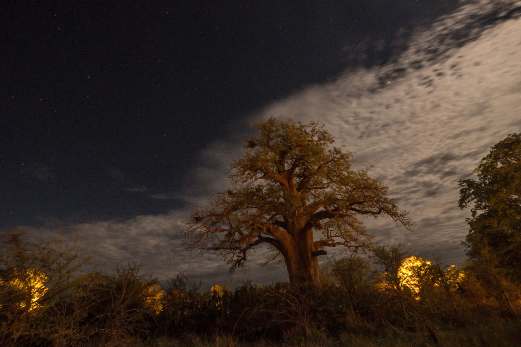 Giant baobab tree during full moon night
